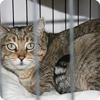 Adopt A Pet :: Evie - Fallbrook, CA