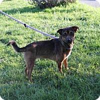 Adopt A Pet :: PENNY - San Martin, CA