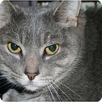 Adopt A Pet :: Mr Ed - Frederick, MD