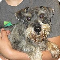 Adopt A Pet :: Buck - Greenville, RI