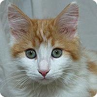 Adopt A Pet :: Yonkers M. - Sacramento, CA