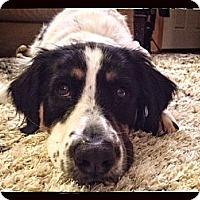 Adopt A Pet :: Samson - Alexandria, VA