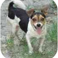 Adopt A Pet :: Hop-a-long - Jacksonville, FL