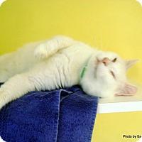 Adopt A Pet :: MooMoo - Lancaster, MA
