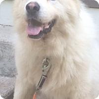 Adopt A Pet :: Fluffy - Hazard, KY