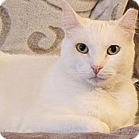 Adopt A Pet :: Fiona - Seminole, FL