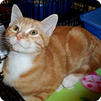 Adopt A Pet :: Fruity - Chattanooga, TN