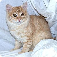 Adopt A Pet :: Starlight B - Sacramento, CA