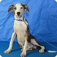 Adopt A Pet :: Owen - Charlemont, MA