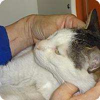 Adopt A Pet :: CRICKET- Playful Snuggler'15 - New York, NY