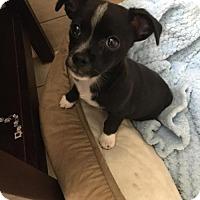 Adopt A Pet :: Finn - Davie, FL
