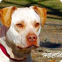 Adopt A Pet :: Hector - Daleville, AL
