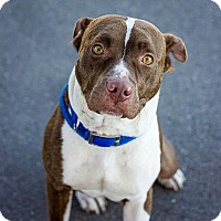 Adopt A Pet :: Jazzy - Berkeley, CA