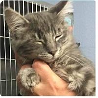 Adopt A Pet :: Fernando - Springdale, AR