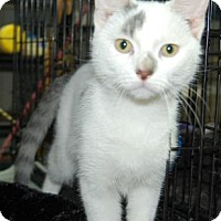 Adopt A Pet :: Groot - Brooklyn, NY