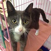 Adopt A Pet :: Kali $75 - Seneca, SC