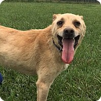Feist Mix Dog for adoption in Rockville, Maryland - Tito