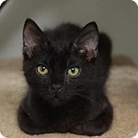 Adopt A Pet :: Tickle160796 - Atlanta, GA