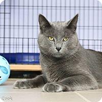 Adopt A Pet :: Blue - Ann Arbor, MI