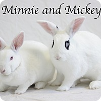 Adopt A Pet :: Minnie - Bradenton, FL
