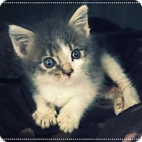 Adopt A Pet :: Mario - Los Alamitos, CA