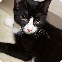 Adopt A Pet :: Bubbles - Montclair, NJ