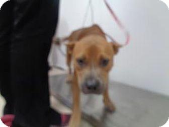 Terrier (Unknown Type, Medium) Mix Dog for adoption in St Augustine, Florida - Spice