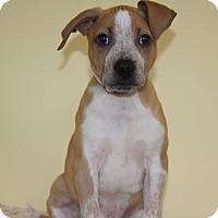 Adopt A Pet :: Poplar - Waldorf, MD