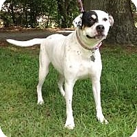 Adopt A Pet :: Piper - Kingwood, TX