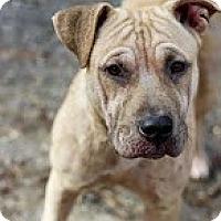 Adopt A Pet :: Bunny - Tinton Falls, NJ