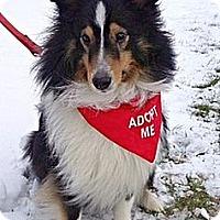 Adopt A Pet :: Timmy - Green Bay, WI