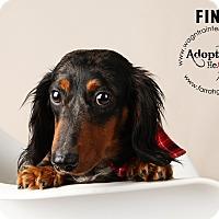 Adopt A Pet :: Finn - Omaha, NE