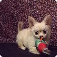 Adopt A Pet :: Pip - Murphy, NC