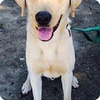 Adopt A Pet :: Taz - Torrance, CA