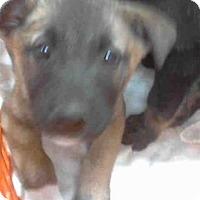 Adopt A Pet :: A268432 - Conroe, TX