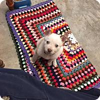 Adopt A Pet :: April - Brattleboro, VT