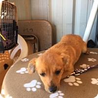 Adopt A Pet :: RYLYNN - Elk Grove, CA