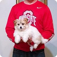Adopt A Pet :: Oscar - South Euclid, OH