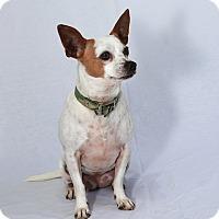 Adopt A Pet :: Marie - Berkeley, CA