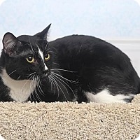 Adopt A Pet :: Skunk - Chippewa Falls, WI