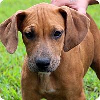 Adopt A Pet :: Addison - Glastonbury, CT
