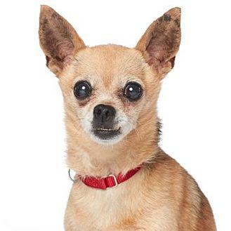 Chihuahua Mix Dog for adoption in Los Angeles, California - MIRANDA