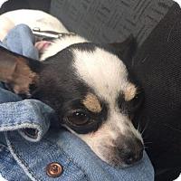 Adopt A Pet :: Gina - Vancouver, BC