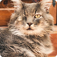 Adopt A Pet :: Meow - Brimfield, MA