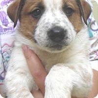 Adopt A Pet :: Matteo - Waupaca, WI