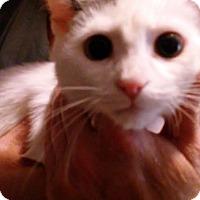 Adopt A Pet :: Luke - Columbus, OH