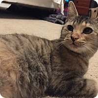Adopt A Pet :: Malaga - Cincinnati, OH