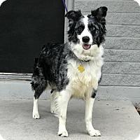 Adopt A Pet :: Namiko - Salt Lake City, UT