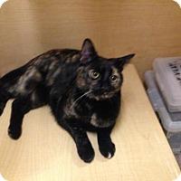 Adopt A Pet :: Jemma - Newtown Square, PA