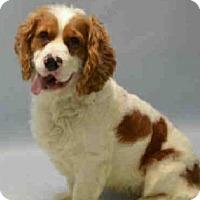 Adopt A Pet :: Chulo - Flushing, NY